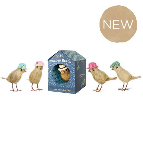 Garden Birds in Bird Box | Dcuk